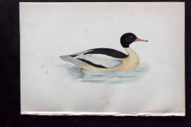 Morris 1870 Antique Bird Print. Goosander